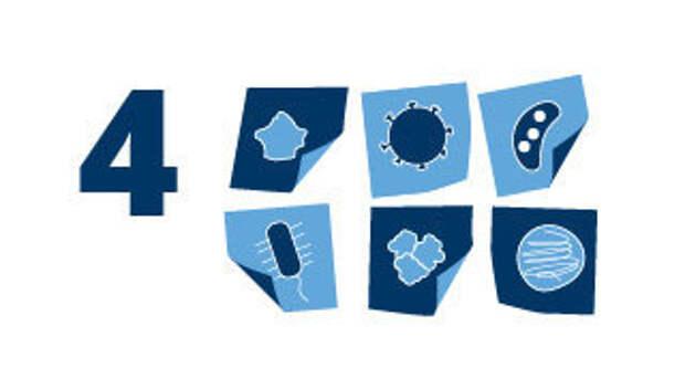 Восемь фактов об иммунитете