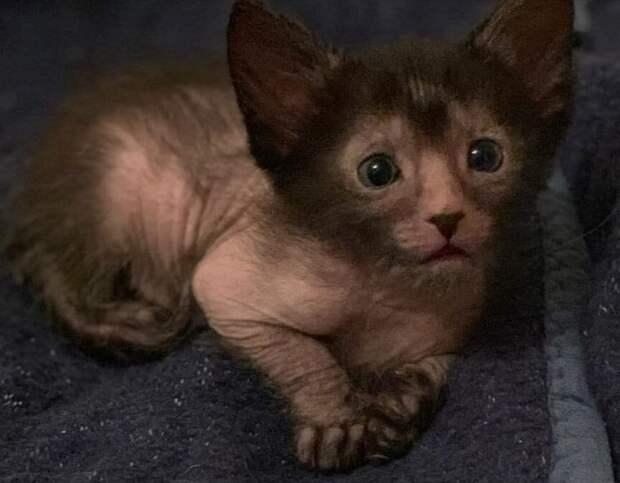 Лысый котёнок сидел в подъезде, люди думали, что ему нужна помощь, но оказалось, нет