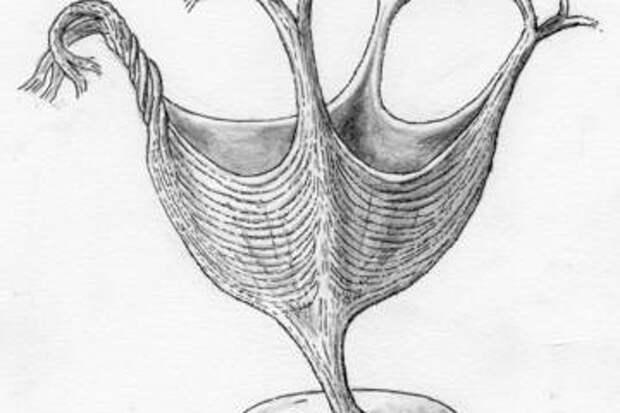 Обнаружено самое древнее животное, обладавшее мышцами