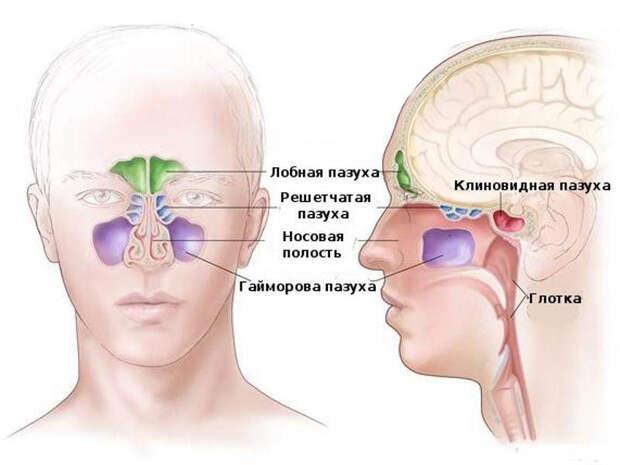 Вот что надо делать при первых симптомах насморка