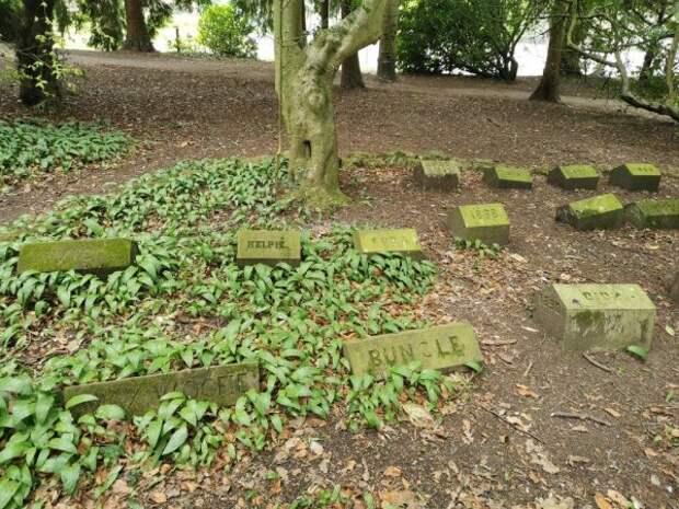 Настоящее кладбище домашних животных в лесу