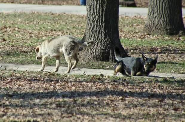 В Красноярском районе Самарской области от бешенства погибла собака