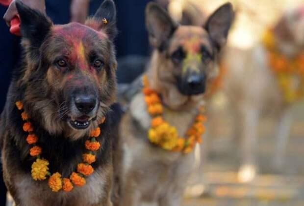 Собачий праздник в Непале