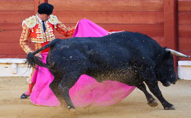 Евробезумие, испанский вариант: запретили корриду из-за неполиткорректных кличек быков