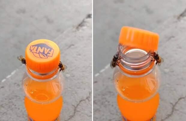 Видео: Пчелы откручивают крышку у газировки