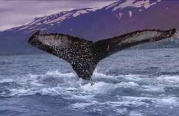 Вылов китов отменен в Исландии