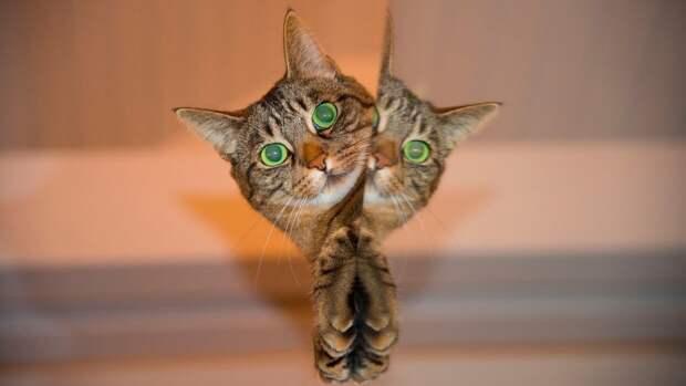 Ученые выяснили, что кошкам нравится сидеть даже в иллюзорных коробках
