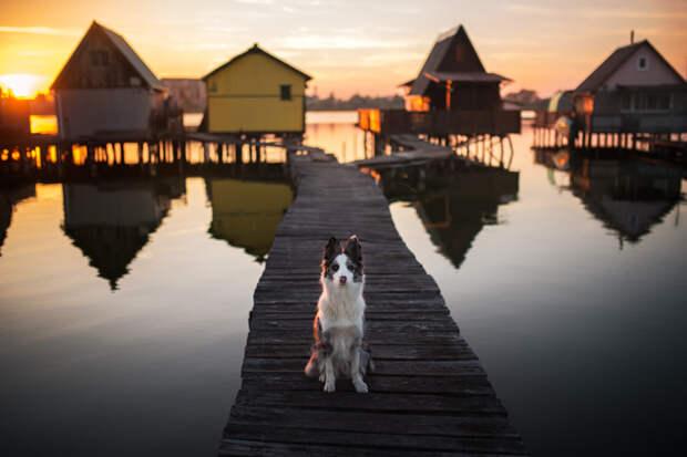 Bokod Lake by Iza Łysoń on 500px.com