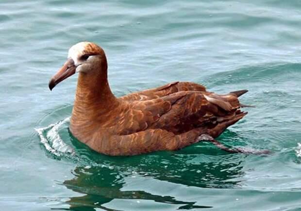 Альбатрос-птица-Описание-образ-жизни-и-виды-альбатроса-2