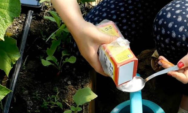 Сыпем пищевую соду в землю