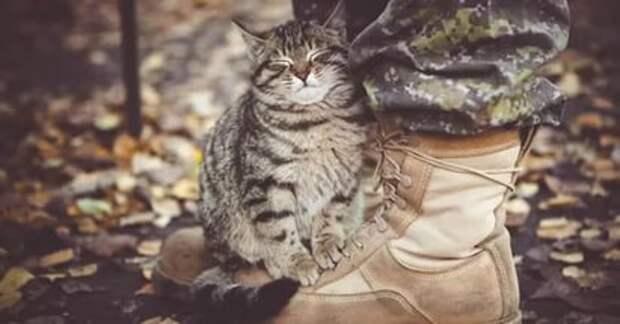 А добрые люди накормят бездомную кошку…