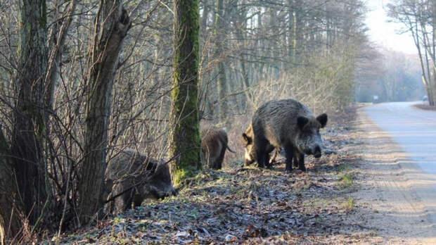 Биолог рассказал о живущих в Ленобласти диких животных