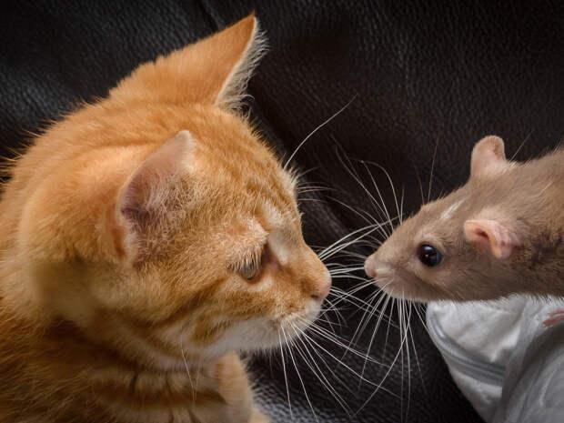 Разработана гениальная модель для изучения работы усов у животных