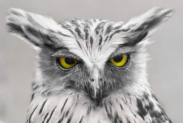Совы — восхитительные птицы