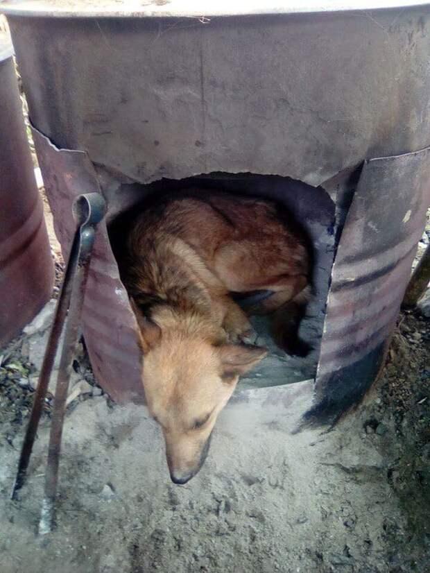 Чтобы спасти раненого пса парень пошел в непроходимые горы