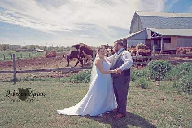 Совет да любовь...эээ... всем на этой ферме в кадре, главные герои, животные, забавно, смешно, фото, юмор