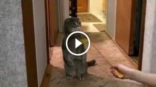 Кот удивился дверному звонку