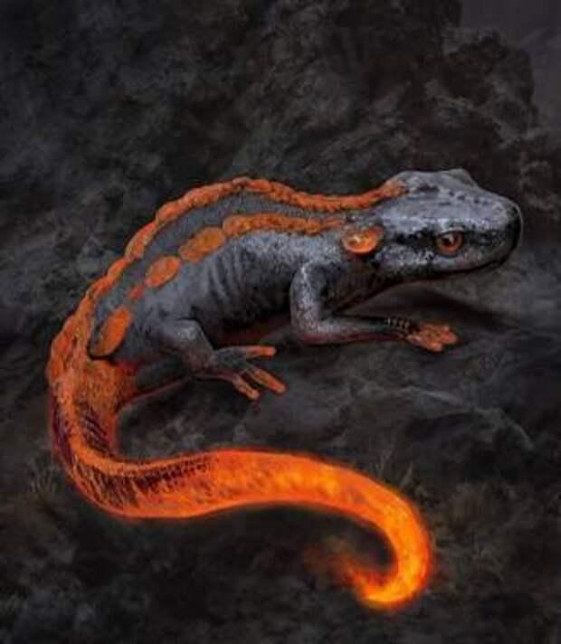Огненная саламандра и сказы о кремниевой жизни