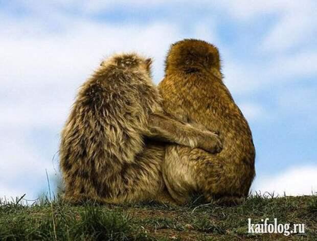 Приколы про животных (40 фото)