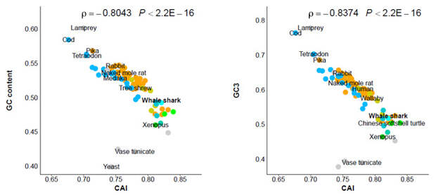 Рис. 3. Обратная корреляция между значениями GC и GC3