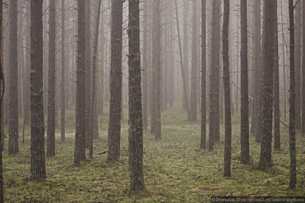 Где на Руси грибов много? Едем на родину белого гриба в Подвинье.