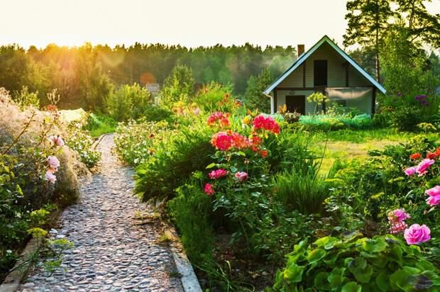 Полезные советы огородникам-любителям