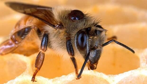 Подмосковных аграриев призвали заранее предупреждать пчеловодов о применении пестицидов