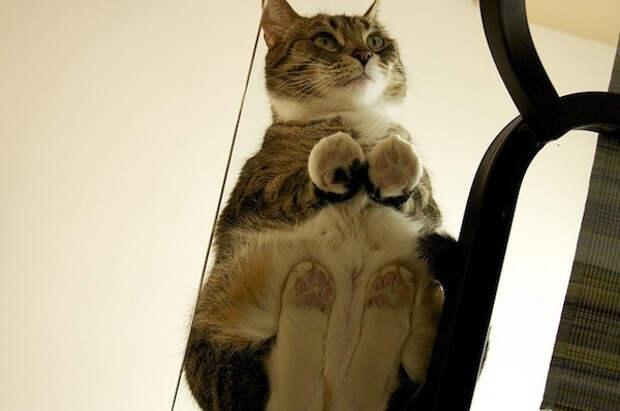 вид снизу коты на стеклянных столах (9)