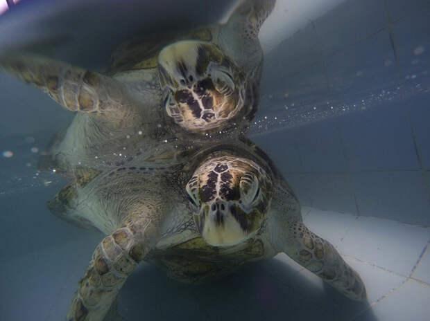 Вы не поверите, что извлекли ветеринары из этой черепахи!