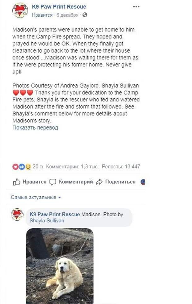 Пес почти месяц ждал своих хозяев у руин сгоревшего дома в Калифорнии ynews, пожары в Калифорнии, потерянные животные, преданность, собаки