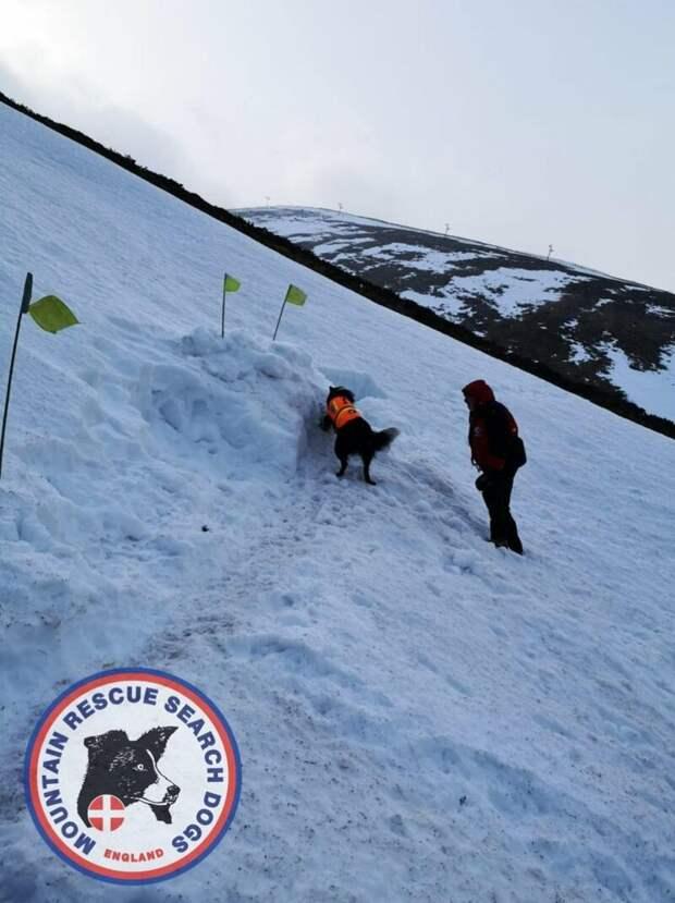 Поисковая собака за 30 секунд спасла оператора из-под снежного завала в мире, видео, животные, люди, собака, спасение