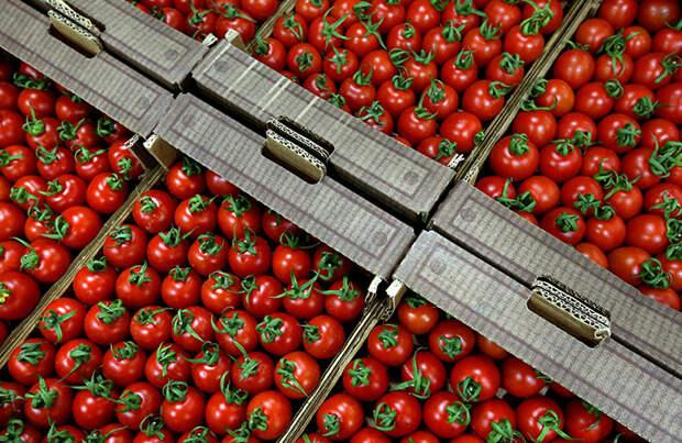 РФ нашла в турецких помидорах вирус морщинистости. До этого Эрдоган заявил о непризнании Крыма российским