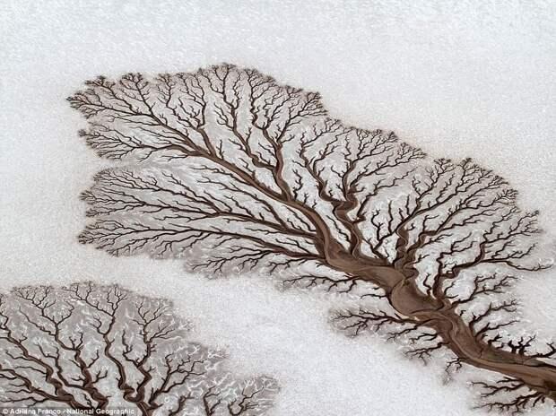 Сюрпризы природы: наэти нереалистичные фото вам захочется взглянуть дважды
