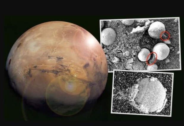 На фотографиях Марса обнаружены грибы и плесень. Правда ли это?