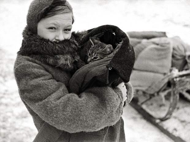 Как кошки спасали блокадный Ленинград
