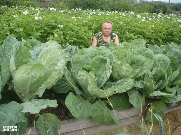 Удивительный огород Игоря Лядова!