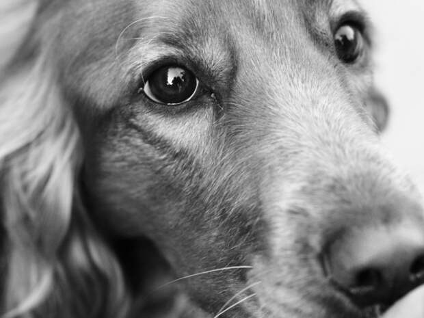 Переживания собаки