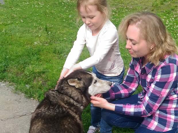 Ребенок просит домашнее животное? Лайфхак: как отказать без обид и слез