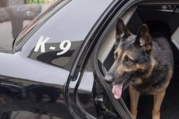 Собаки-детекторы Криминалистика, адвокатские истории, интересные факты