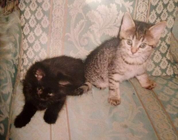 К британке вернулся одноглазый кот пропавший 11 лет назад животные, кот