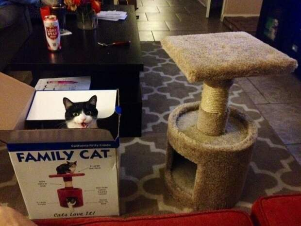 6. Если вы думаете, что они по достоинству оценят дорогой кошачий домик, то подумайте еще раз Кошка в доме, домашние животные, забавные фото с котами., кошка, кошки, фото кошек, хозяева животные, юмор