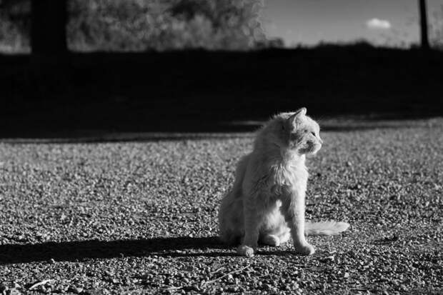 Cat on sun by Juanjo Rueda on 500px.com