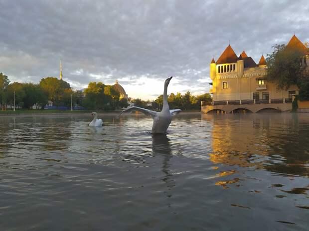 Фото дня: на ВДНХ лебедь расправил крылья