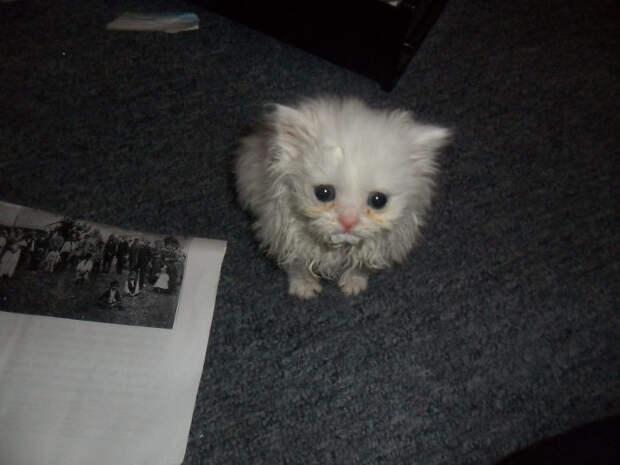 Этого малыша подобрали на заднем дворе дома встреча, гости, дружба, животные, коты, кошки, неожиданно, фото