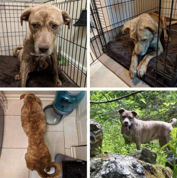 Животные до и после того, как их спасли от бездомной жизни