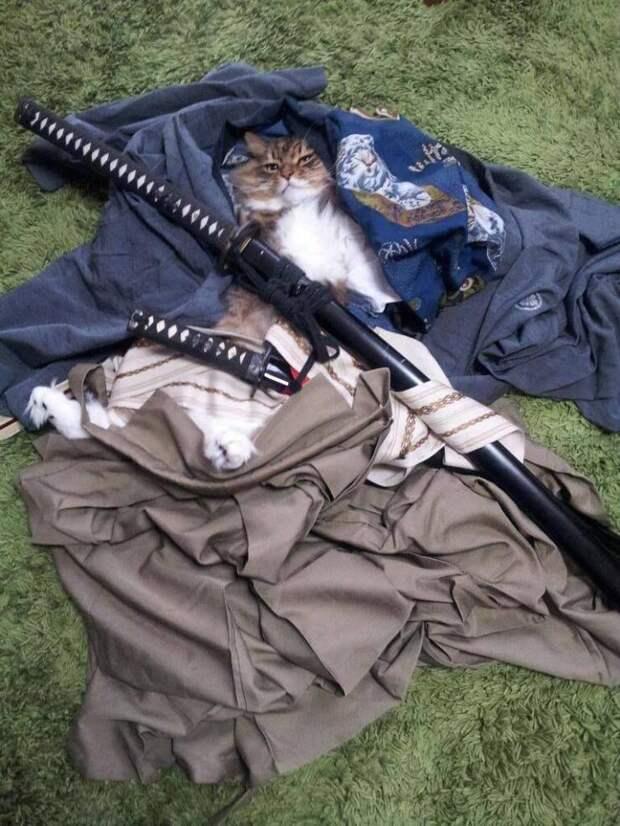 Кот с самурайским мечом
