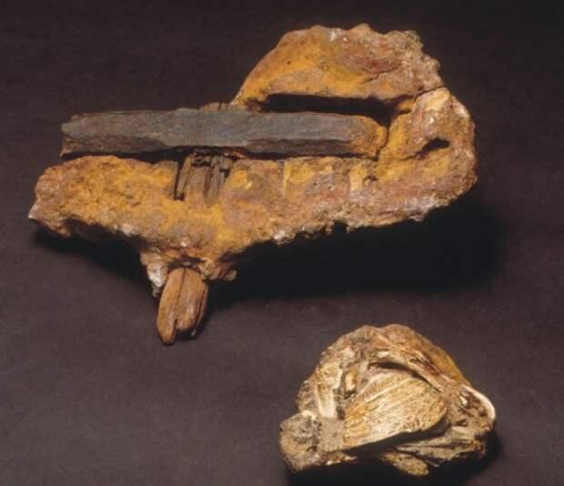 Этот артефакт возрастом 100 миллионов лет озадачил ученых