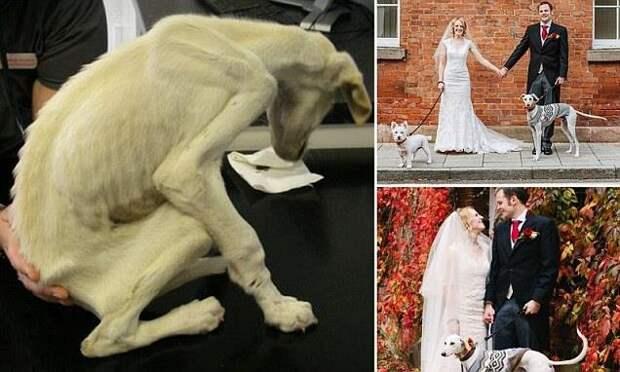 """Новая жизнь """"самой тонкой собаки в мире"""""""