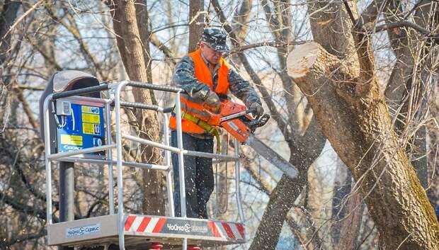 Сухие деревья спилили в одном из дворов Подольска по просьбе жителя