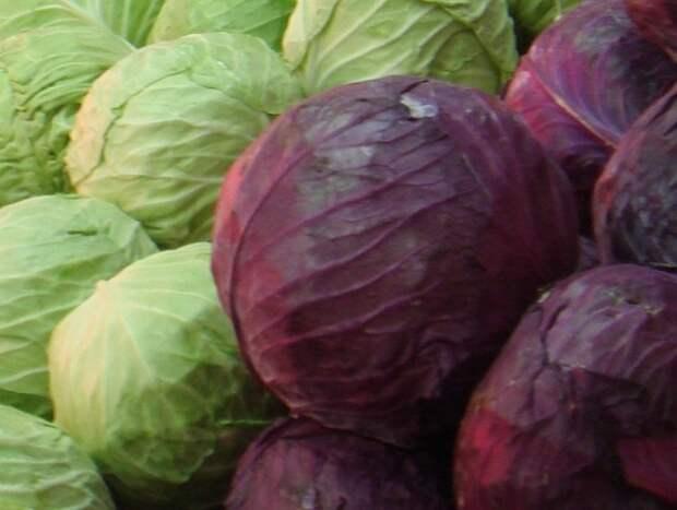 В России за неделю заметно подорожали капуста, картофель и лук